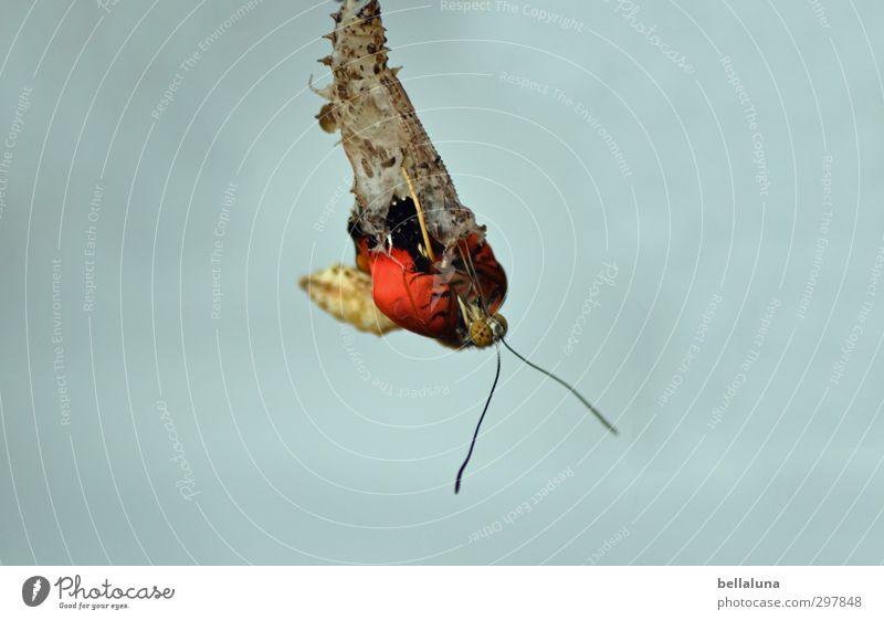 felicitaciones por cumpleaños Fotoline Natur schön Pflanze rot Tier schwarz gelb natürlich braun außergewöhnlich Wildtier elegant ästhetisch Schmetterling