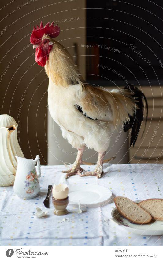 Frühstücksei Gesunde Ernährung Tier Lebensmittel Häusliches Leben Perspektive Beginn Wandel & Veränderung Küche Bauernhof Bioprodukte Haustier Brot Mut Geschirr