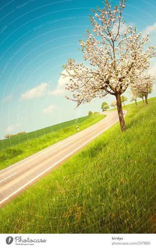 Schieflage Landschaft Himmel Wolken Sonnenlicht Frühling Schönes Wetter Baum Wiese Straße Landstraße Blühend Duft Freundlichkeit frisch positiv schön blau grün