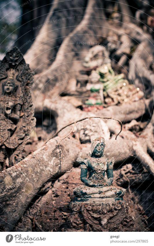 Anbetungswürdig Pflanze Baum Glaube Religion & Glaube Buddhismus Buddha Statue Ganesh Farbfoto mehrfarbig Außenaufnahme Menschenleer Schwache Tiefenschärfe