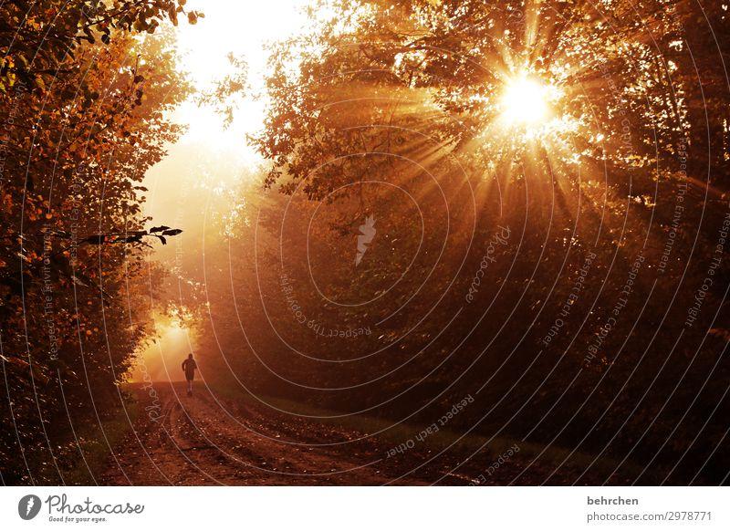 weils immer weiter geht! Umwelt Natur Landschaft Sonne Herbst Pflanze Baum Sträucher Blatt Wald laufen fantastisch schön Optimismus Mut Hoffnung Glaube Jogger