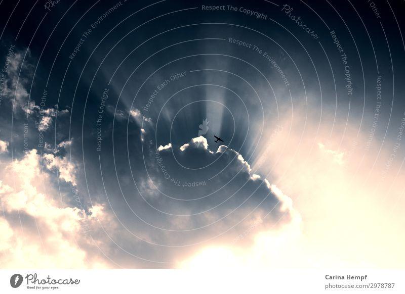 Clouds Sonne Ruhestand Erneuerbare Energie Luftverkehr Umwelt Himmel nur Himmel Wolken Sonnenlicht Wetter Schönes Wetter Vogel atmen fliegen Unendlichkeit