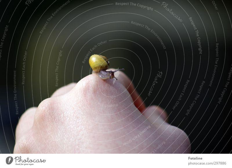 Liebe zum Detail | Schneckchen Haut Hand Finger Natur Tier Wildtier Schnecke klein nah natürlich Fühler Schneckenhaus krabbeln Farbfoto mehrfarbig Außenaufnahme