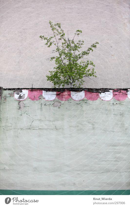 Zurückeroberung Baum Mauer Wand Erfolg Kraft anstrengen Einsamkeit Endzeitstimmung Überleben Umwelt Vergänglichkeit trotzig Wachstum Stadt schäbig trist grün