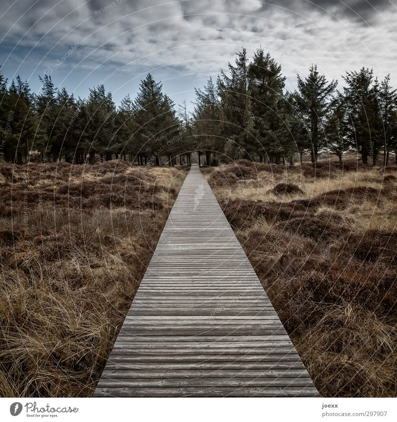 Vor Himmel Natur blau alt weiß Einsamkeit Landschaft Wolken schwarz Wald Wege & Pfade braun gehen Park Wetter Kraft