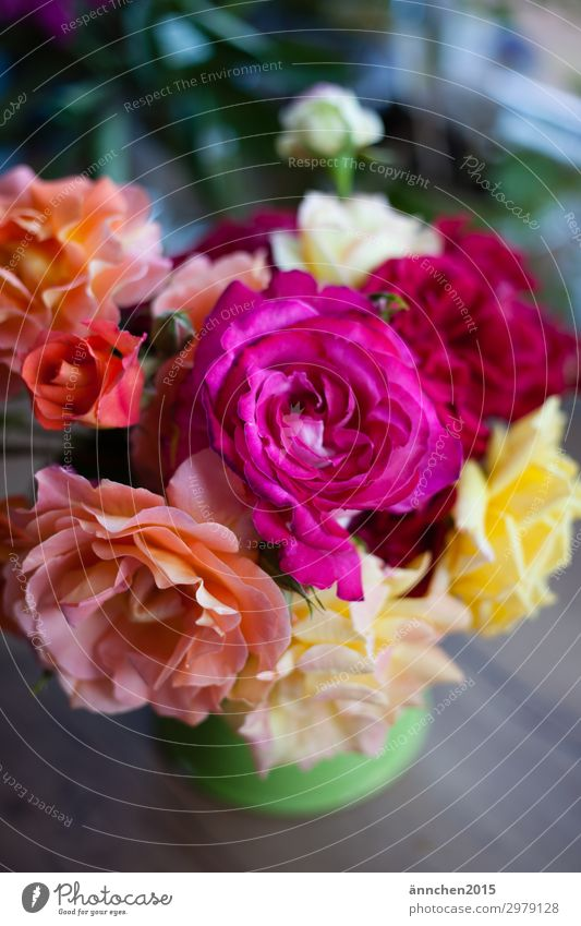 Rosenliebe I Blumenstrauß Sommer Natur Garten Vase Dekoration & Verzierung Innenaufnahme Hochformat gelb rosa mehrfarbig Geschenk Liebe Pflanze pflücken Blüte