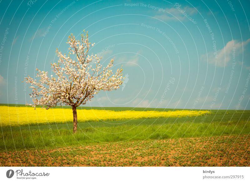 Blütezeit Himmel Natur blau grün schön weiß Sommer Baum Farbe Landschaft gelb Wärme Frühling Horizont Feld leuchten