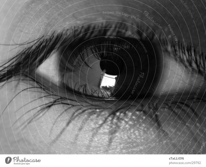 oeil Frau Auge Wimpern
