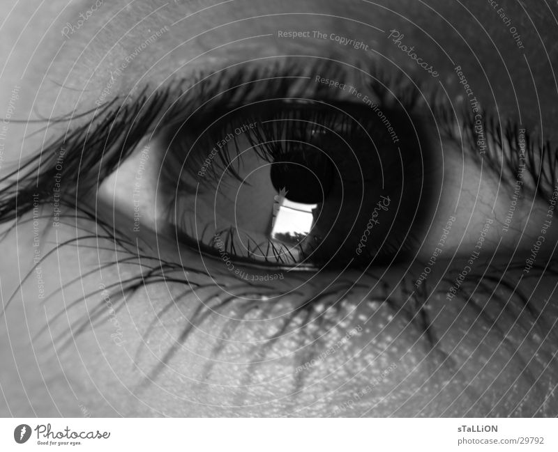 oeil Wimpern Frau Auge Schwarzweißfoto Blick Reflektion Tristess