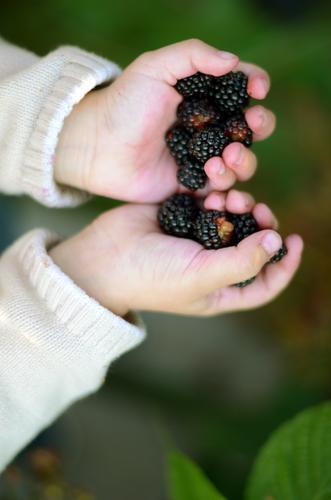 Handvoll Mensch Kind Garten Gesundheit Lebensmittel Kindheit Frucht frisch Finger Ernährung süß festhalten Kleinkind Ernte lecker