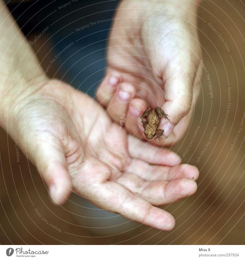 Lieber einen Frosch in der Hand... Mensch Kind Kleinkind Kindheit Finger 1 1-3 Jahre 3-8 Jahre Tier krabbeln klein niedlich hüpfen Farbfoto Nahaufnahme