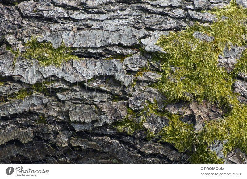 Die Rinde ist das Beste grün Baum Senior Moos Baumrinde rau