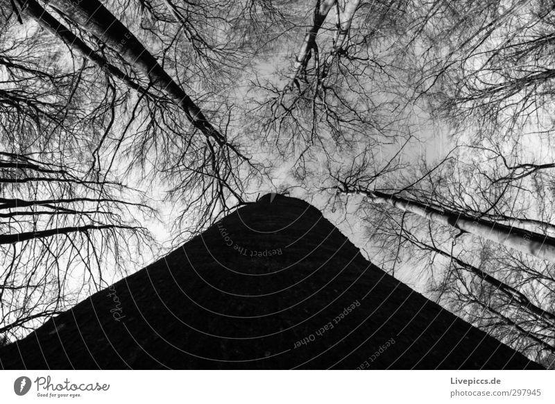ein Tag im Wald Himmel Natur weiß Pflanze Baum Landschaft Wolken ruhig Winter schwarz Umwelt Holz hoch bedrohlich Baumstamm