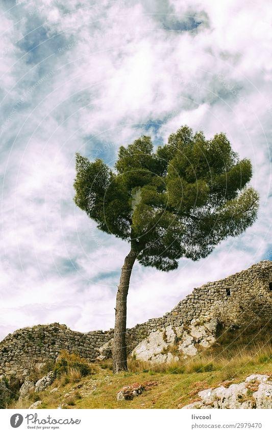 einsamer Baum in der Zitadelle von Berat Ferien & Urlaub & Reisen Tourismus Ausflug Berge u. Gebirge Natur Landschaft Pflanze Urelemente Himmel Wolken Frühling