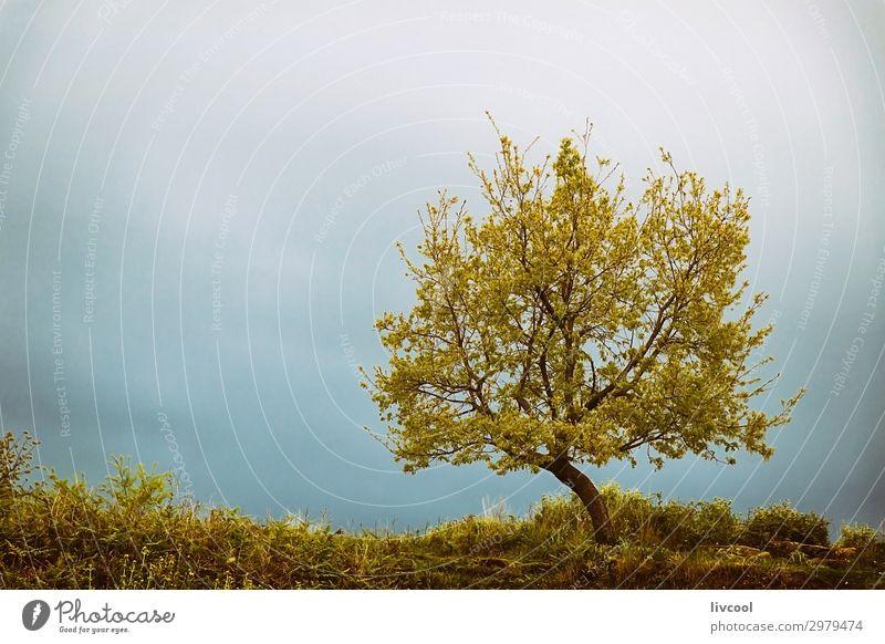 Ferien & Urlaub & Reisen Natur Pflanze blau schön grün Landschaft Baum Wolken Einsamkeit Blatt ruhig Wald Berge u. Gebirge Frühling Gras