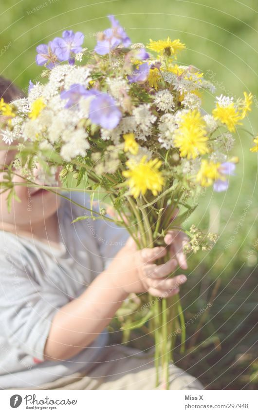 Zum Muttertag Feste & Feiern Geburtstag Mensch Kind Kleinkind Kindheit 1 1-3 Jahre Pflanze Frühling Sommer Schönes Wetter Blume Blüte Garten Wiese Blühend Duft