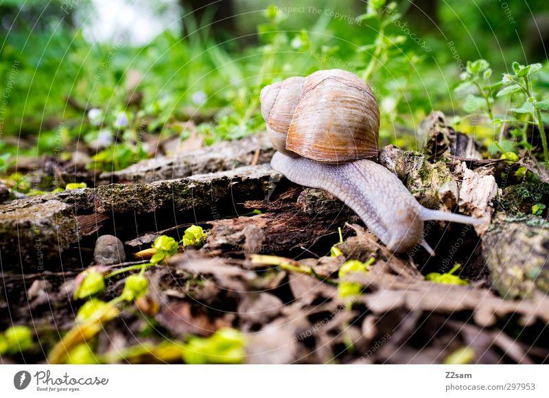 Schneckchen Natur Ferien & Urlaub & Reisen grün Einsamkeit Landschaft ruhig Umwelt Wiese Frühling Bewegung Blüte natürlich gehen authentisch groß Schönes Wetter