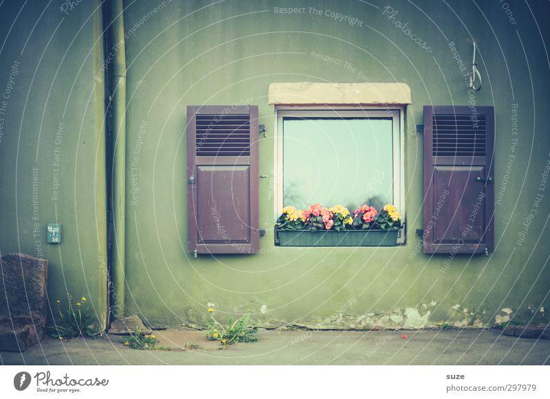 Fensterbild Häusliches Leben Dekoration & Verzierung Blume Mauer Wand Fassade Holz authentisch einfach trist grün Fensterladen Landleben ländlich altmodisch