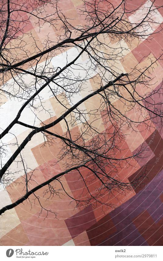 Bunte Blechfahne Kunst Kunstwerk Gemälde Baum Zweig Halle (Saale) Deutschland bizarr Vergangenheit bemalt Farbstoff Farbenspiel Kreativität Straßenkunst