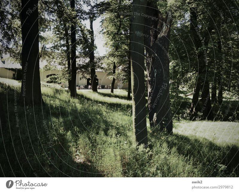 Bischof-Benno-Haus Schmochtitz Umwelt Natur Landschaft Pflanze Schönes Wetter Baum Gras Sträucher Grünpflanze Baumstamm Garten Park Wald Mauer Wand Fassade