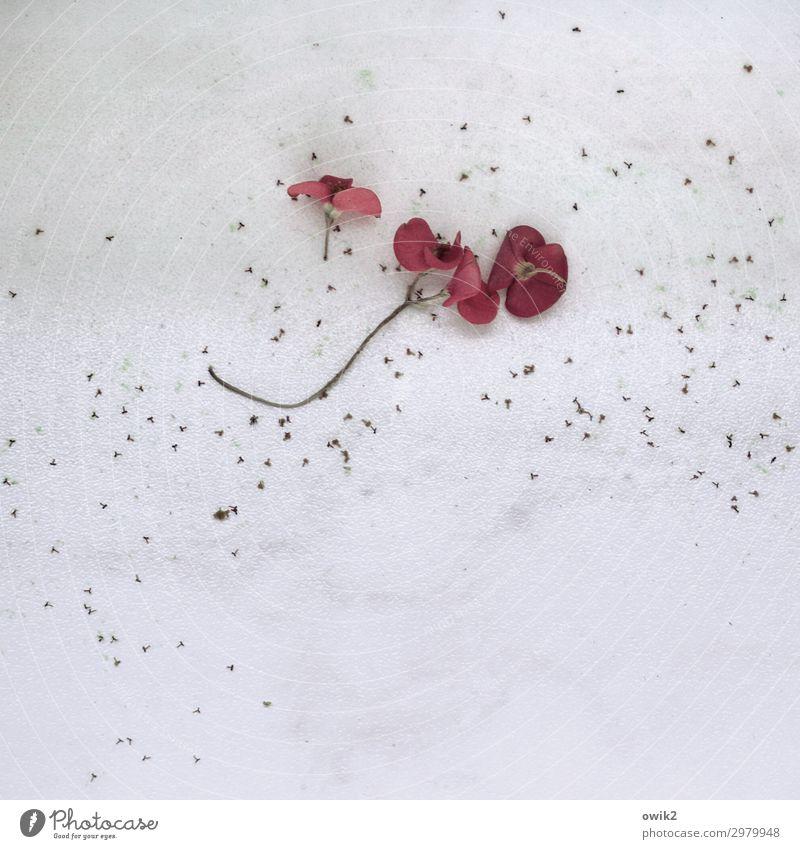 Verlustangst Blume Blüte klein nah unten Traurigkeit Sorge Trauer Verfall Vergänglichkeit verlieren Farbfoto Innenaufnahme Nahaufnahme Detailaufnahme