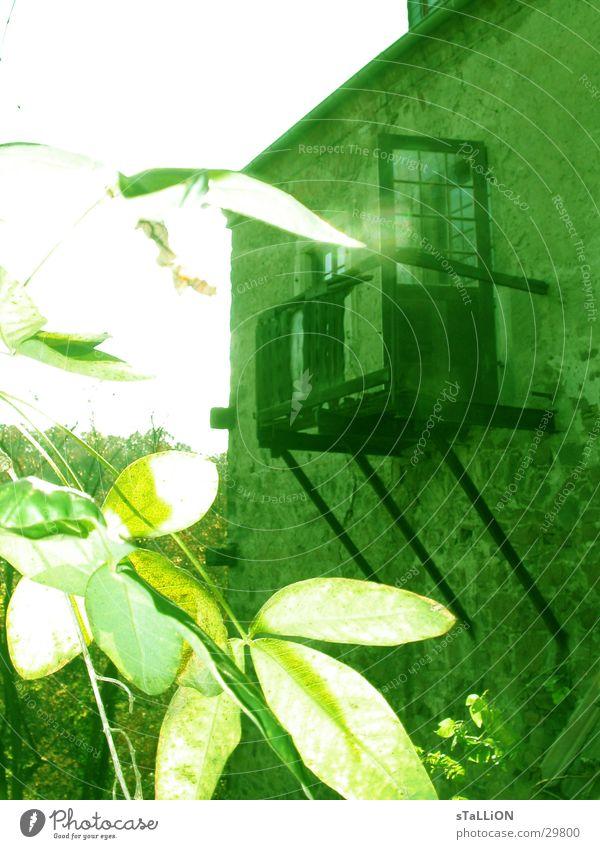 loggia Sonne grün Blatt Architektur Burg oder Schloss Balkon