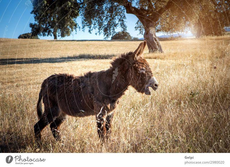 Natur weiß Landschaft Tier Freude lustig Gras braun Aussicht niedlich Lebewesen Pferd Weide Haustier Gesäß Säugetier