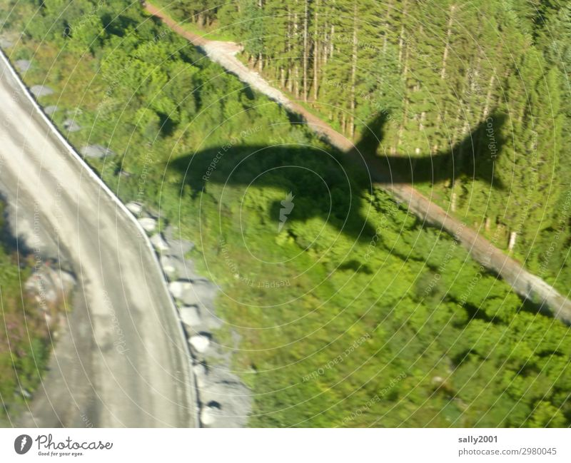 im Landeanflug... Wald Straße Wege & Pfade Luftverkehr Flugzeug Passagierflugzeug Flugzeuglandung Flugzeugstart Flugzeugausblick bizarr Güterverkehr & Logistik