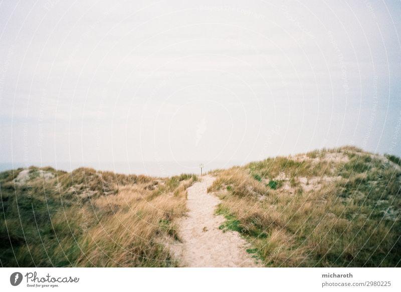 Weg zum Strand Ausflug Sommerurlaub Umwelt Natur Pflanze Sand Himmel Klima Schönes Wetter Sträucher Grünpflanze Nordsee Meer Insel Langeoog ästhetisch