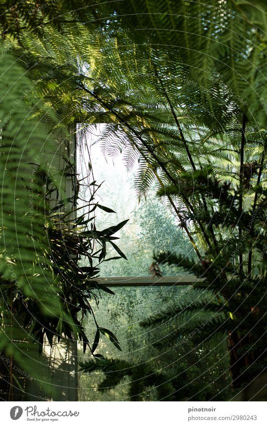 Farnwedel Sommer Natur Pflanze Blatt Grünpflanze exotisch Urwald natürlich saftig grün Wachstum tropisch Palmenwedel Botanik Botanischer Garten Gewächshaus
