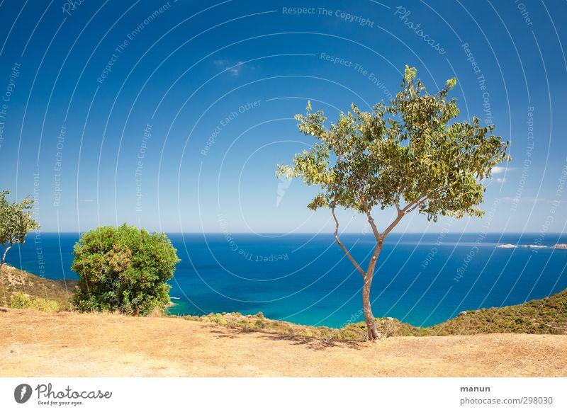 Standort Ferien & Urlaub & Reisen Ferne Sommerurlaub Natur Landschaft Erde Sand Wasser Wolkenloser Himmel Klima Schönes Wetter Wärme Pflanze Baum Sträucher