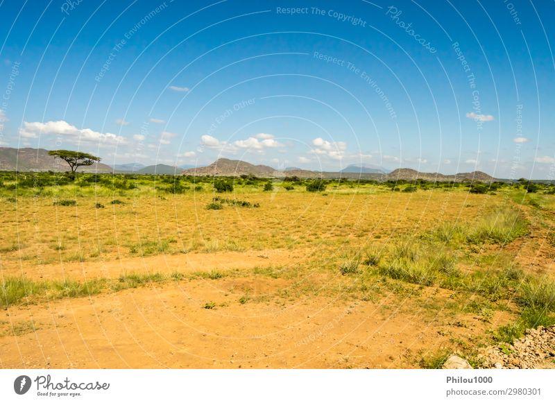 Blick auf die Pfade und die Savanne Spielen Ferien & Urlaub & Reisen Safari Sommer Umwelt Natur Landschaft Himmel Baum Gras Park blau grün Afrika Kenia Samburu