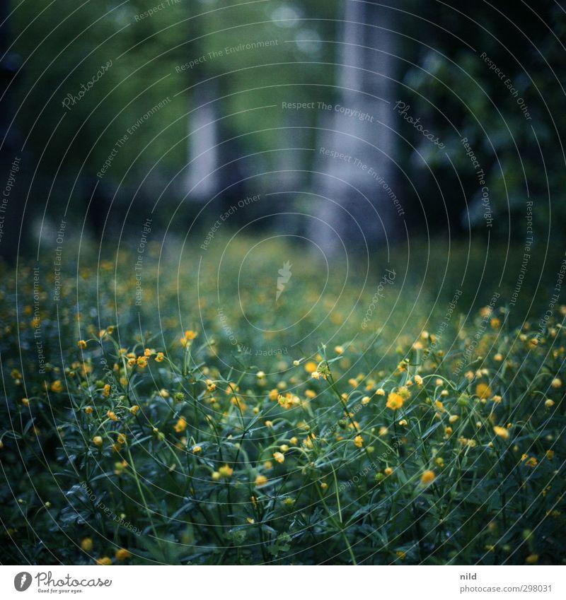 nachts unterwegs – sonntag früh Umwelt Natur Landschaft Pflanze Frühling Gras Blüte Grünpflanze Garten Park blau gelb grün Stimmung ruhig Glaube träumen Trauer