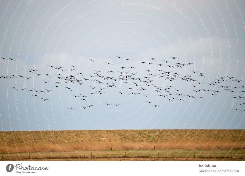 Rømø | ...es raschelt im Stroh... Himmel Natur Pflanze Meer Landschaft Tier Wolken Umwelt Gras Frühling Küste Vogel Wetter fliegen Feld Erde