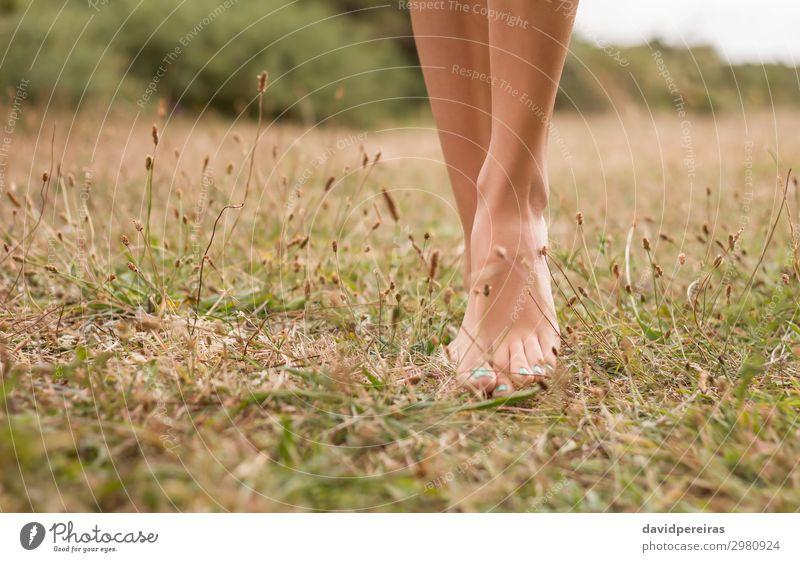 Junge weibliche Beine, die auf dem Gras laufen. schön Erholung Freizeit & Hobby Ferien & Urlaub & Reisen Sommer Garten Frau Erwachsene Fuß Umwelt Natur Pflanze
