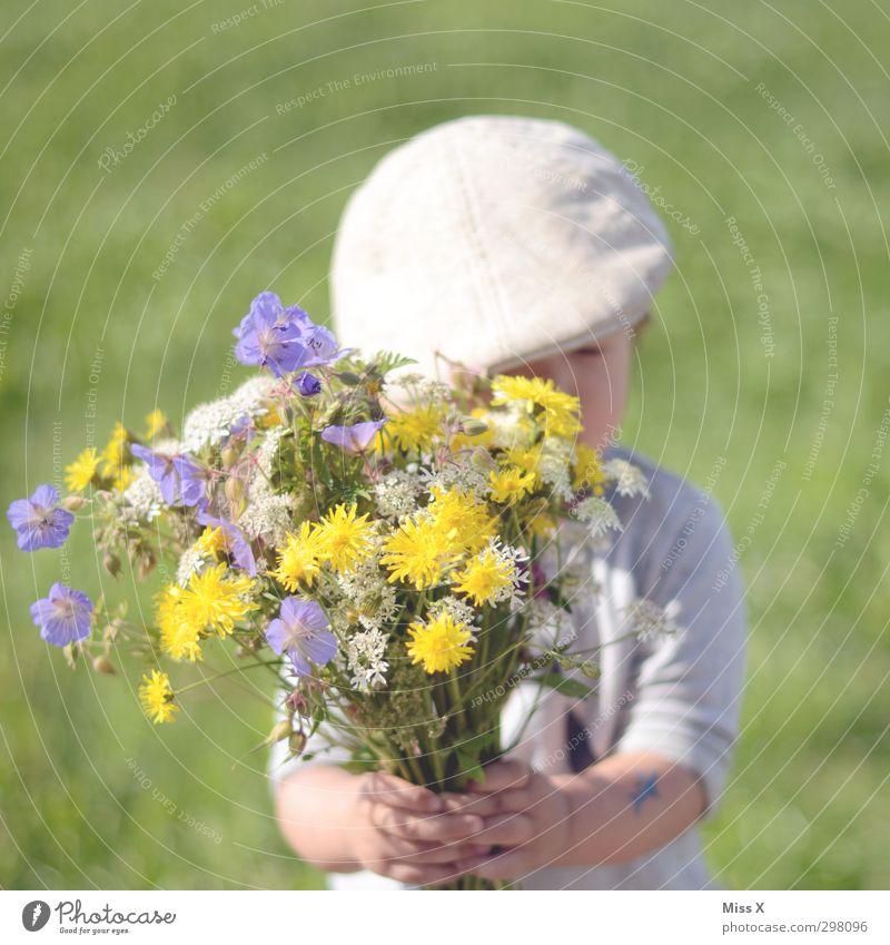 Schüchtern Mensch Kind Sommer Blume Liebe Wiese Gefühle Frühling Blüte Garten Stimmung Kindheit Geburtstag niedlich Geschenk Blühend