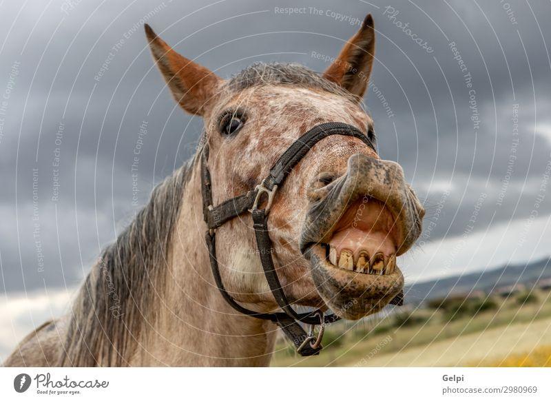 Nahaufnahme eines freien Pferdes schön Gesicht Ferien & Urlaub & Reisen Freiheit Landschaft Tier Himmel Wolken Gras Blüte Park Wiese Herde wild braun gelb grün