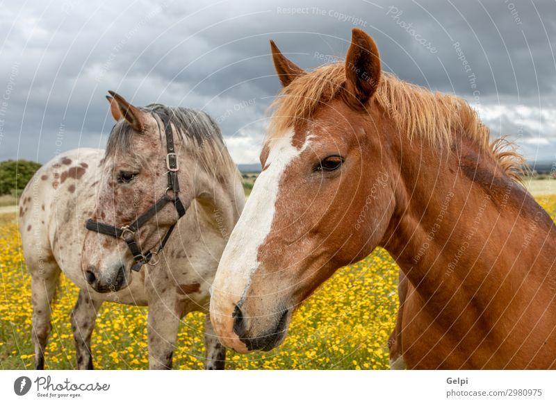 Ein paar Pferde an einem sonnigen Tag schön Freiheit Sommer Paar Partner Landschaft Tier Himmel Wolken Unwetter Baum Gras Park Wiese Herde Liebe dünn frei wild