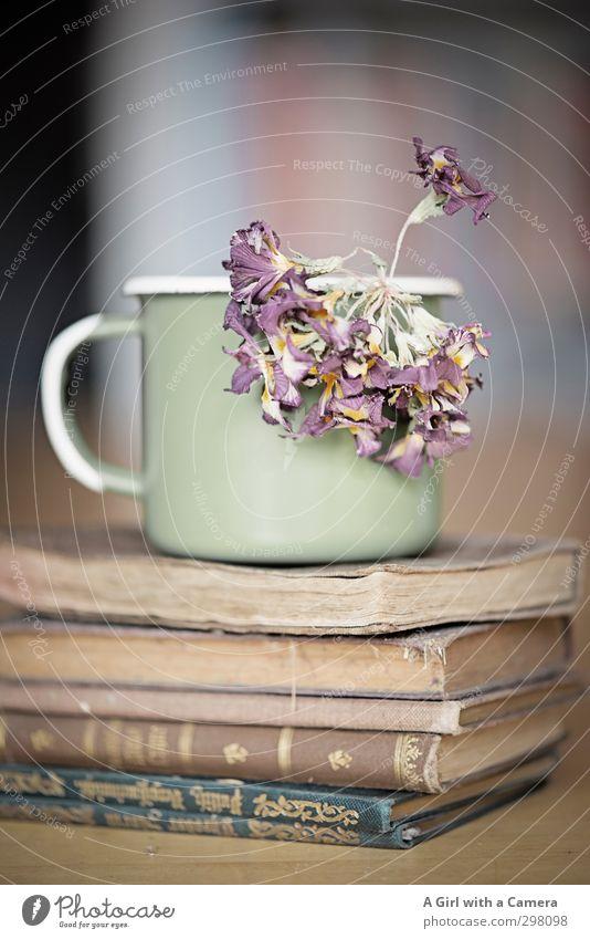 time Tasse Becher Blume alt Buch Trockenblume Stapel Antiquität Antiquariat bleich dünn Gedeckte Farben Innenaufnahme Hintergrund neutral Schwache Tiefenschärfe