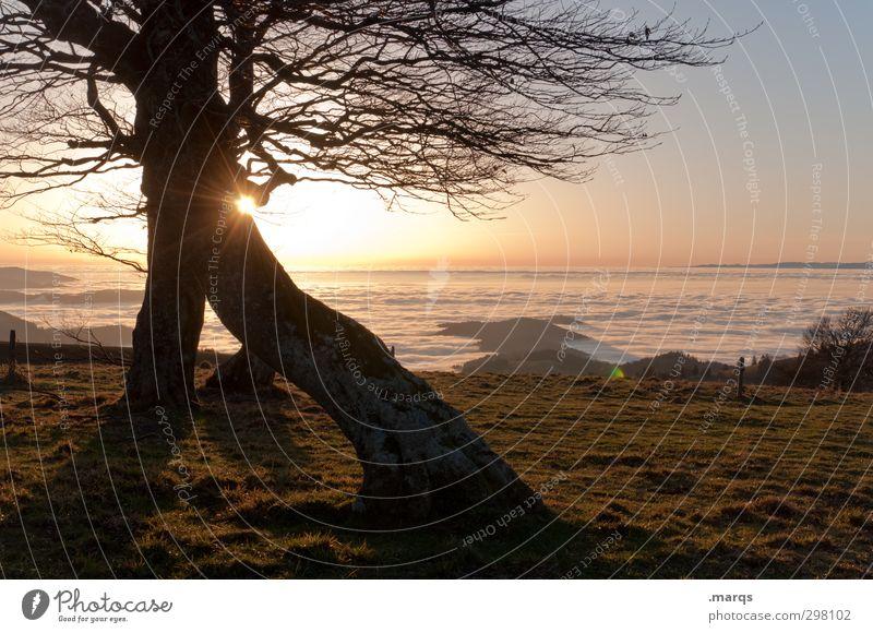 Kitschy Natur schön Pflanze Baum Sonne Landschaft Umwelt Ferne Herbst Stimmung Klima Schönes Wetter Beginn Ausflug Abenteuer Urelemente