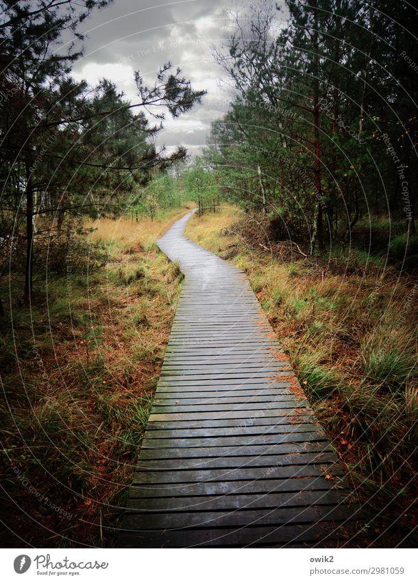 Weg ins Nichts Umwelt Natur Landschaft Pflanze Wolken Horizont Herbst Baum Gras Sträucher Wald Moor Sumpf Pietzmoor Lüneburger Heide Wege & Pfade Naturlehrpfad