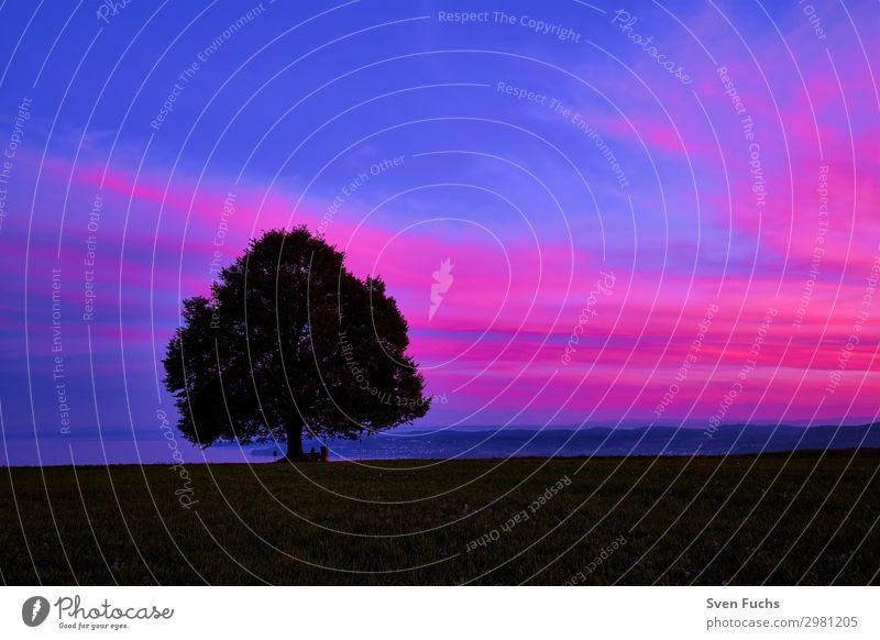 Baum auf Feld gegen Himmel bei Sonnenuntergang ruhig Natur Landschaft Pflanze Horizont Gras blau violett rot Idylle Ziel Bodensee Schönheit in der Natur