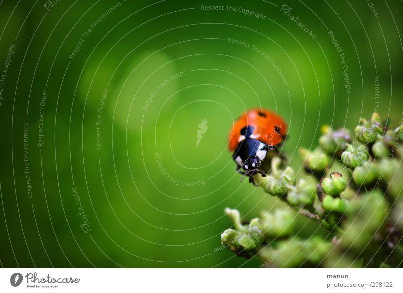 Farbklecks Natur Pflanze Tier Sträucher Wildpflanze Wildtier Käfer Marienkäfer Zeichen Glücksbringer natürlich grün Gefühle Frühlingsgefühle Optimismus Glaube