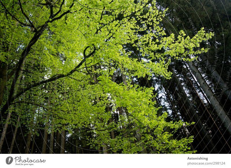 heller Baum - dunkler Wald Himmel Natur grün Sommer Pflanze Landschaft Blatt schwarz Umwelt gelb dunkel hoch stehen