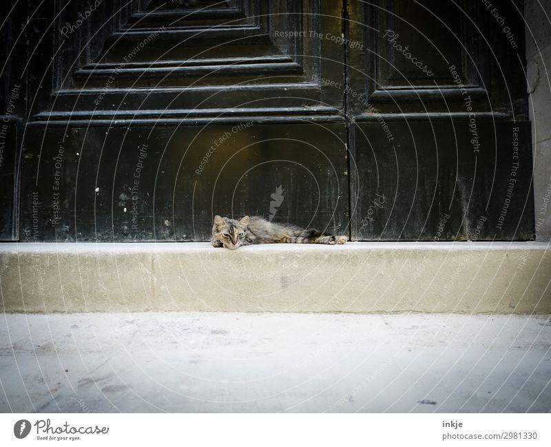 kubanischer Straßenkater Katze Tier Gefühle klein Tür liegen authentisch Coolness Gelassenheit Haustier Eingang lässig Straßenkatze lungern