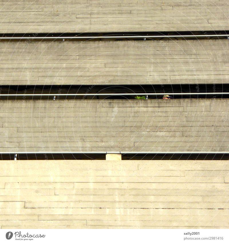 Balkonien... Beton Betonbauweise Haus Fassade trist grau Pflanze Hochhaus Architektur modern armut kalt bedrohlich Betonwand Gebäude Betonmauer Betonwüste