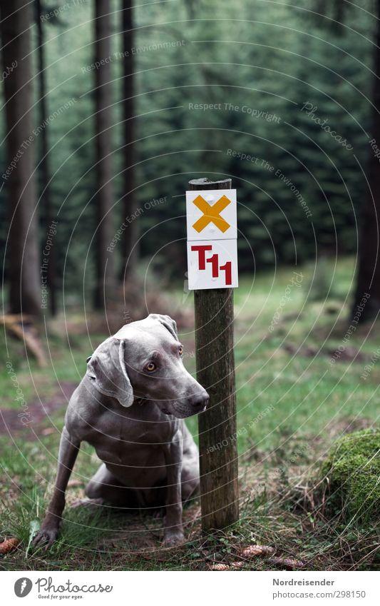 ....Bitte Hund Natur Freude Landschaft Tier Wald Wege & Pfade Freizeit & Hobby sitzen elegant Schilder & Markierungen wandern Schriftzeichen Ausflug Hinweisschild beobachten