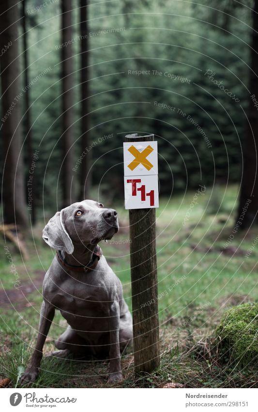 Bitte..... Hund Natur Freude Landschaft Tier Wald Wege & Pfade Freizeit & Hobby elegant Schilder & Markierungen wandern Schriftzeichen ästhetisch Ausflug Hinweisschild beobachten