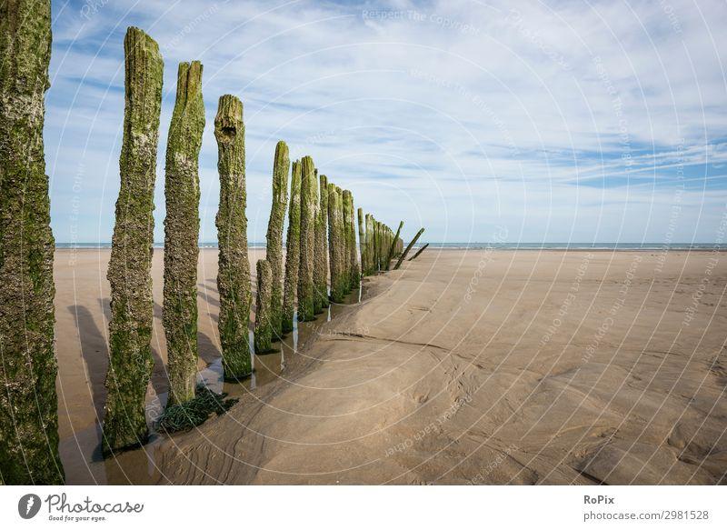 Ferien & Urlaub & Reisen Natur Sommer Wasser Landschaft Meer Strand Lifestyle Holz Umwelt Gefühle Küste Tourismus Freiheit Ausflug Horizont