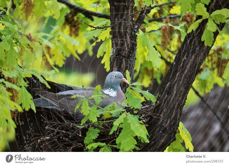 Nesthocker blau grün Tier Blatt Leben Holz oben braun Wildtier sitzen Zufriedenheit hoch Häusliches Leben Perspektive Beginn Zukunft